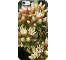 Stages OF Nature iPhone Case/Skin
