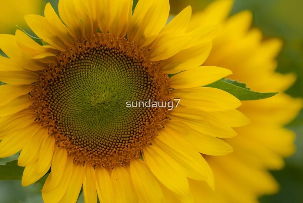Elegant Splendor by sundawg7