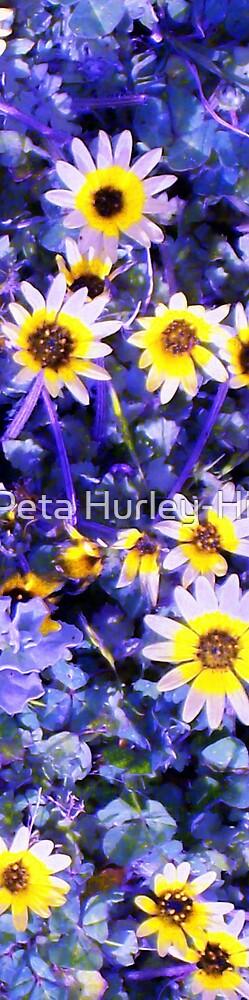 daisy 1 by Peta Hurley-Hill