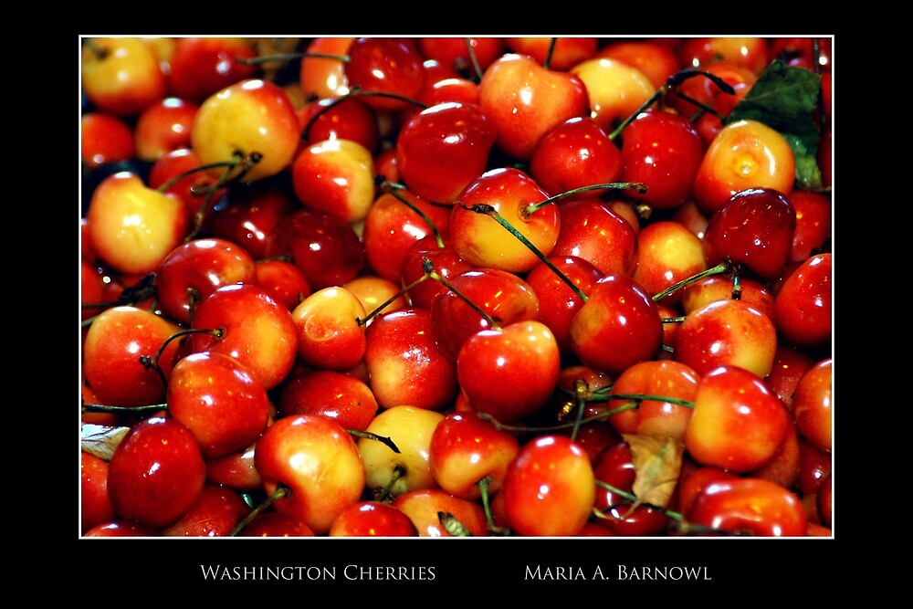 Washington Cherries - Cool Stuff by Maria A. Barnowl