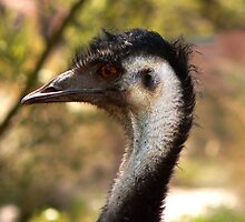 Emu by Margot Kiesskalt