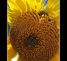 Sunflower Heart - Cool Stuff by Maria A. Barnowl