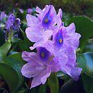 floweristic by budrfli