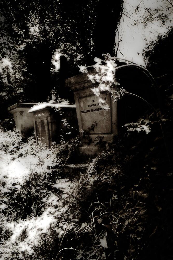 Summer Graves by Stephen Jackson
