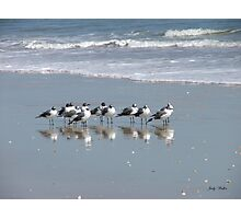 The Gull Gang Photographic Print