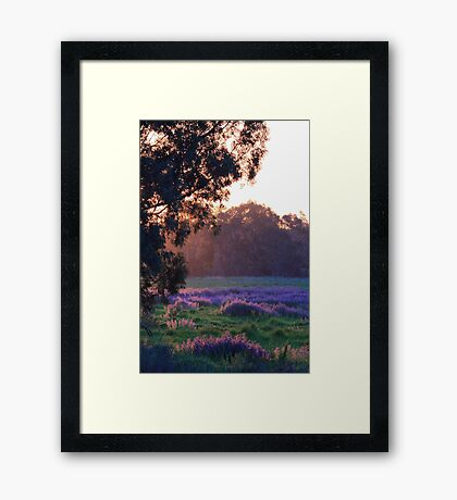 Pattersons Purple Weed At Sunset Framed Print