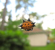 Orange Crab Spider by Brandi Baldwin