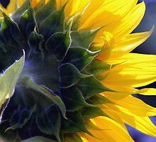 Garden Sunshine by Maria A. Barnowl