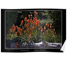 Torch Lilies - Cool Stuff Poster