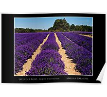 Lavender Rows - Cool Stuff Poster