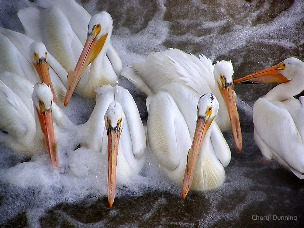 tightly knit group by Cheryl Dunning