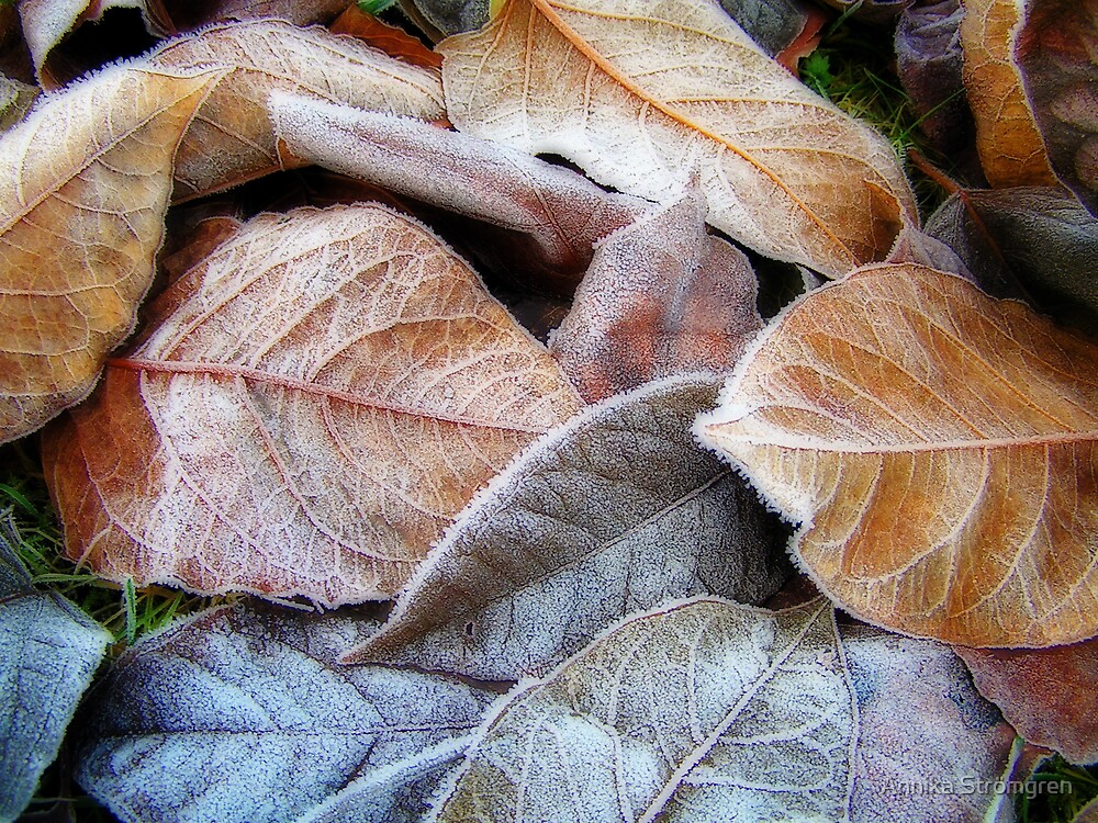 Frosty leaves by Annika Strömgren