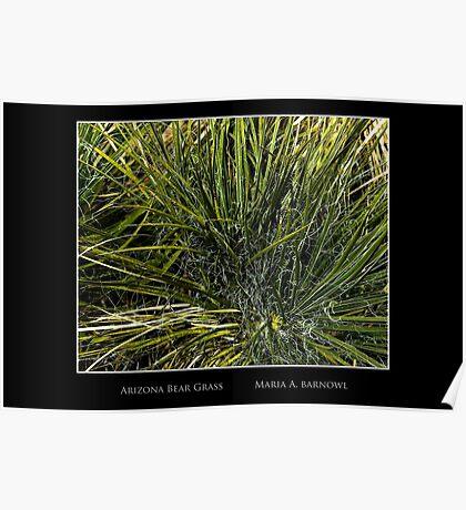 Arizona Bear Grass - Cool Stuff Poster