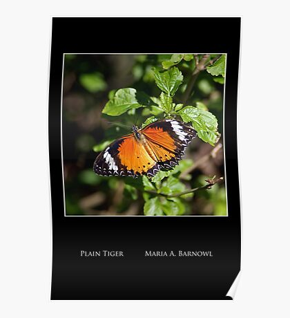 Plain Tiger Butterfly - Cool Stuff Poster