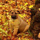 Autumn Addition by wolfllink