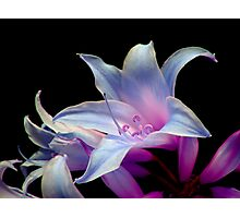 Exotic flora Photographic Print