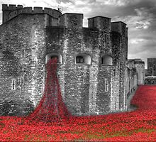 Poppies at the Tower by Chris Day