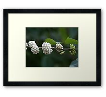 Berries Ripening from Green to White Framed Print