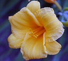 flower by David Stembaugh