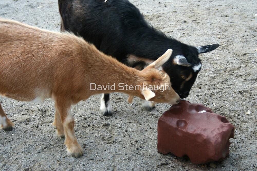 goats by David Stembaugh