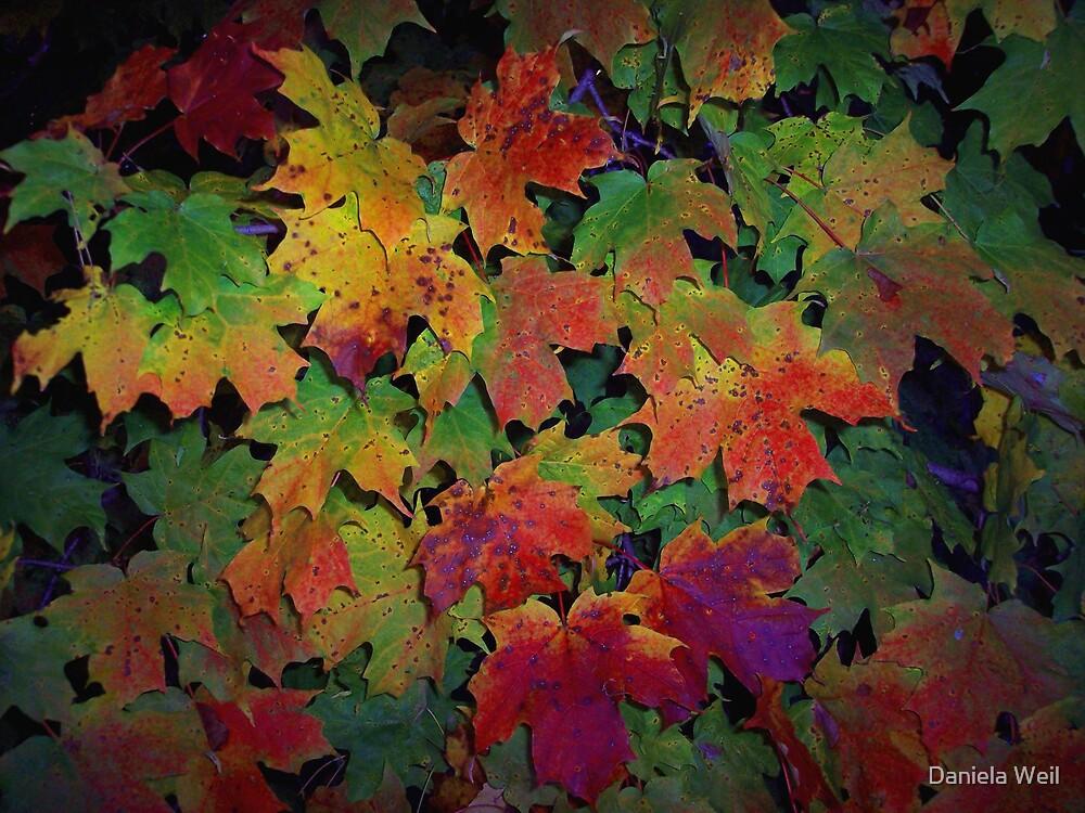 Autumn metamorphosis 1 by Daniela Weil