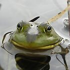Bull Frog Portrait by Martha Medford