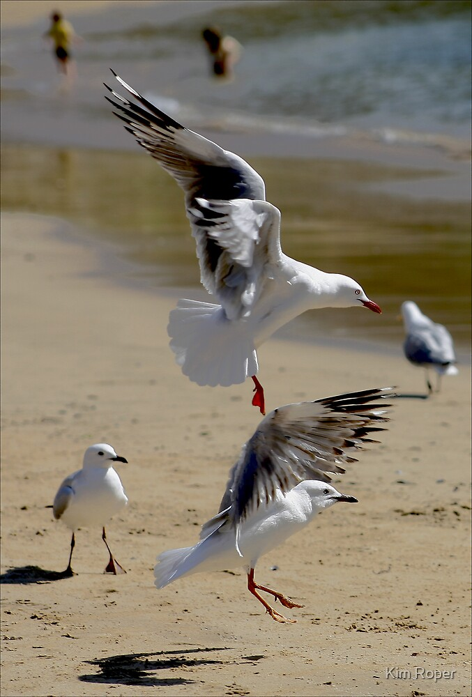 "Dance of the Sugarplum ""Seagulls"" by Kim Roper"