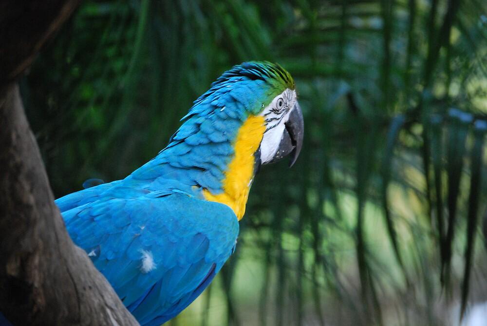 Macaw by Princessbren2006