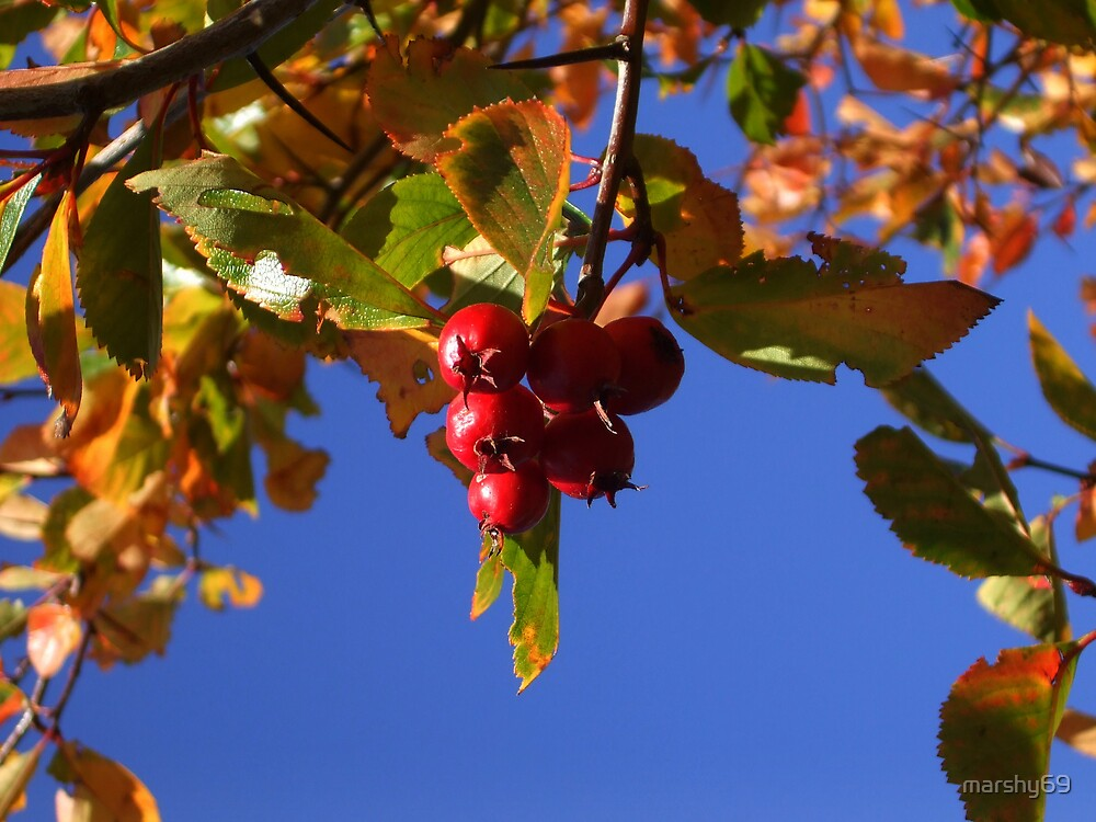 Autumn Berries by marshy69