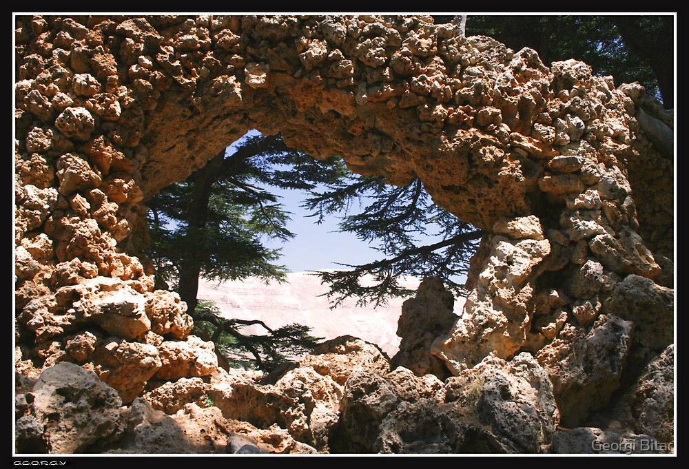 Cedars of Lebanon by Georgi Bitar