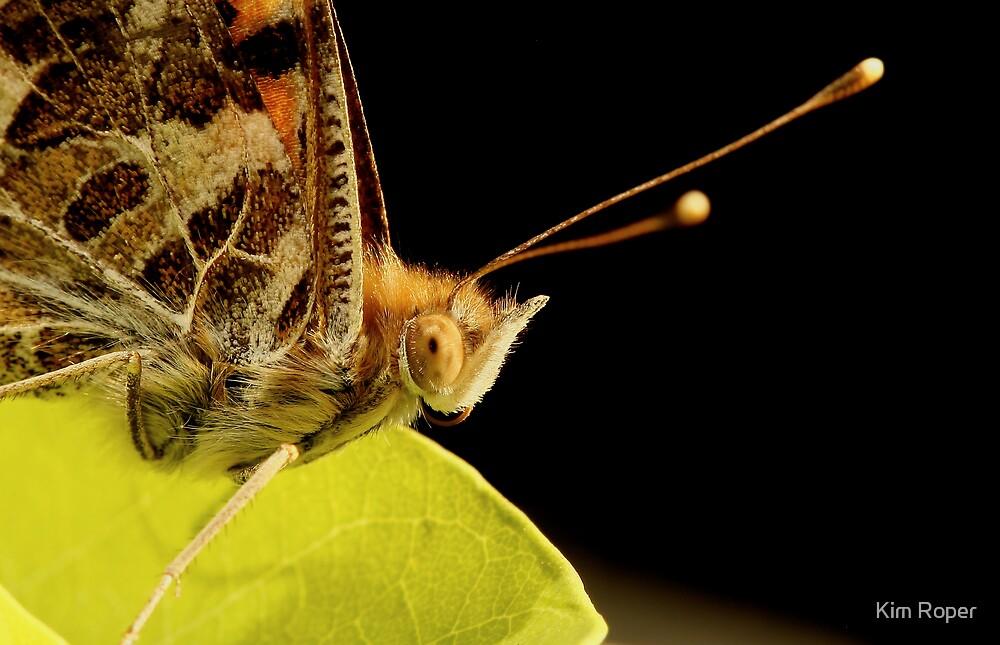 Butterfly Eyes by Kim Roper
