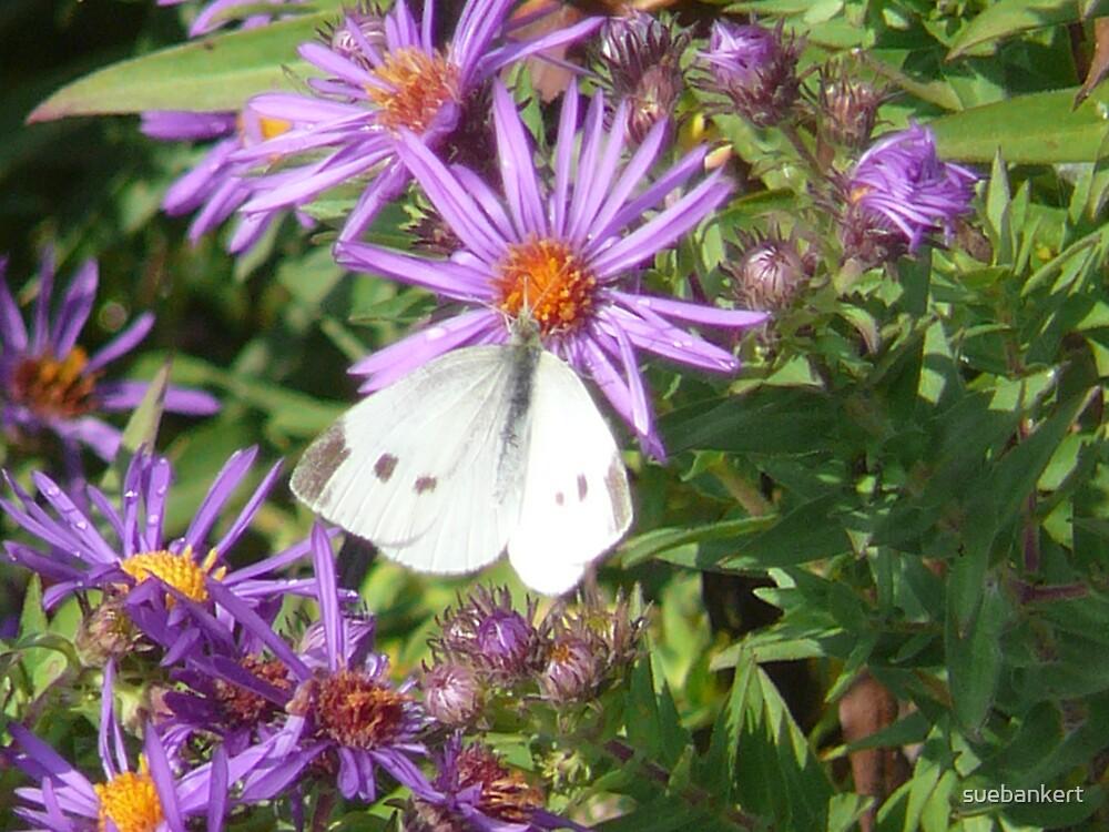 Butterfly by suebankert