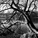 Craggy Tree by Xpresso