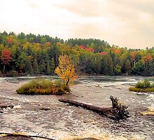 Tahquamenon River by Erika Rathka