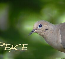 Peace Dove by Kirk Allemand