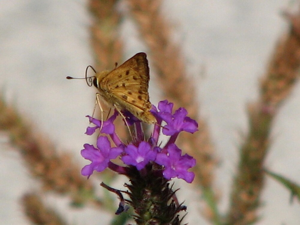 Butterfly with purple flower by IndyLady