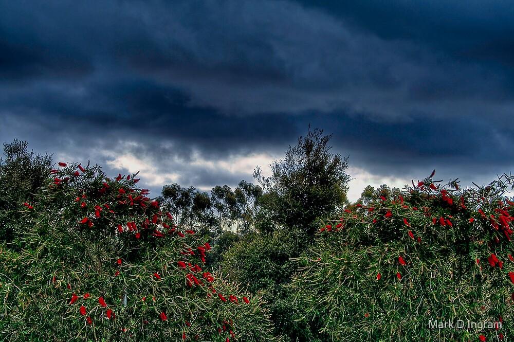Bush Sky by Mark D Ingram