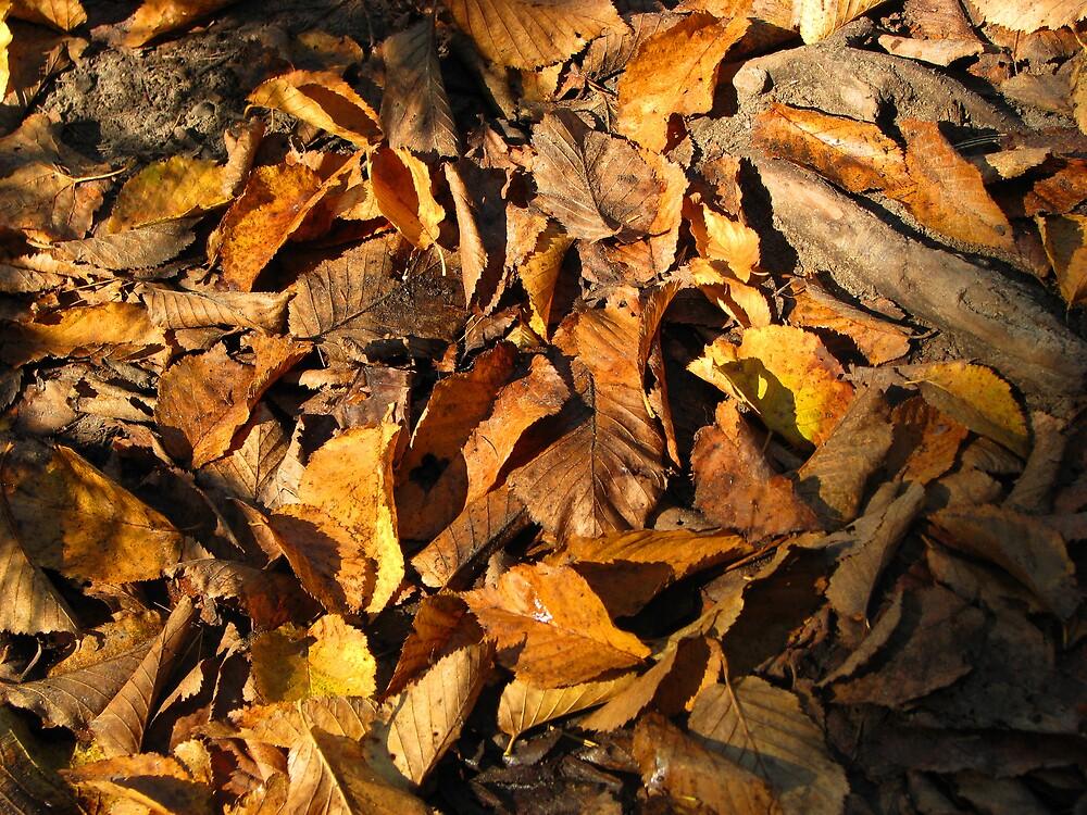 true fall colours~! by ashleymaiwoo