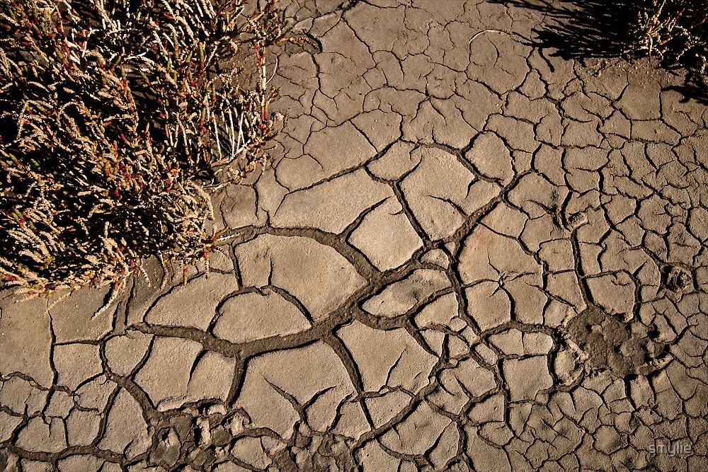 Too Dry by smylie