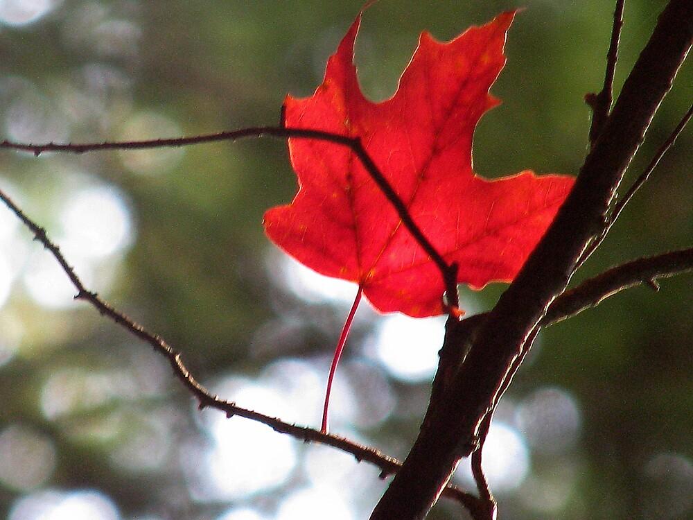 Glowing in Canada! by ashleymaiwoo
