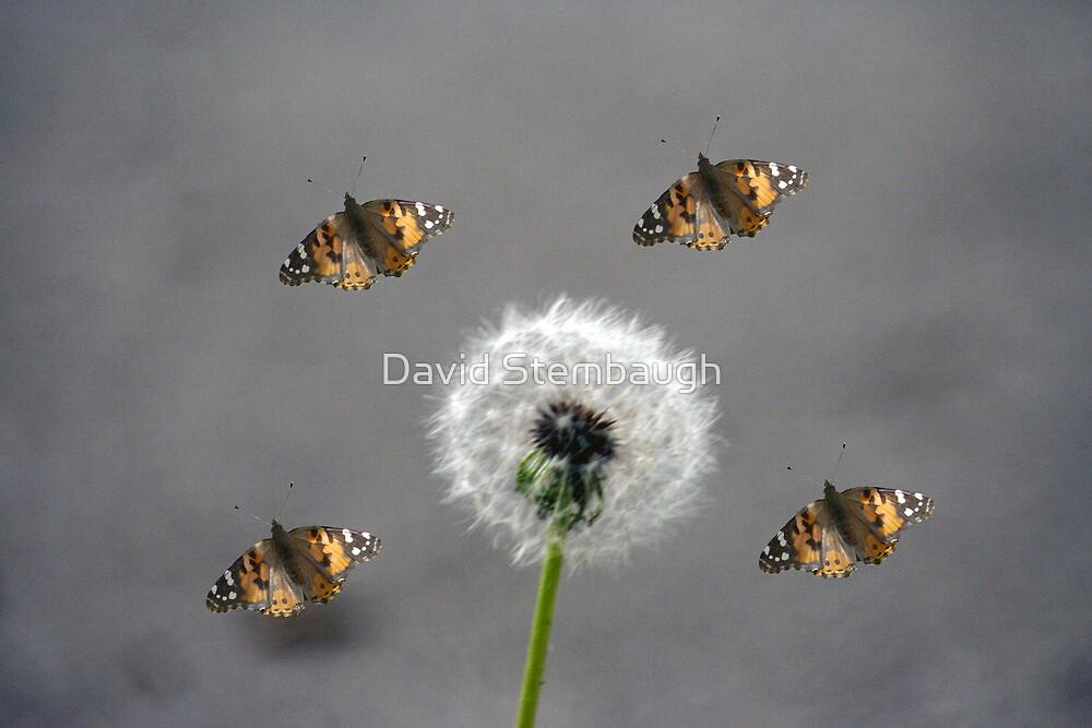 October Dandelion by David Stembaugh