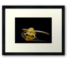 Io moth Framed Print