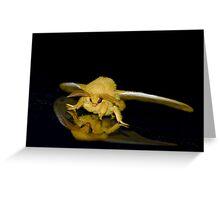 Io moth Greeting Card