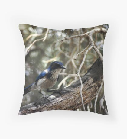 Blue Jay and Branches Throw Pillow