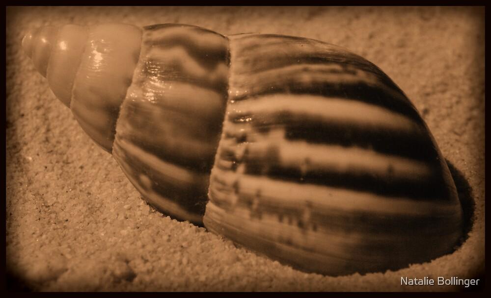 Striped Shell by MidnightAkita