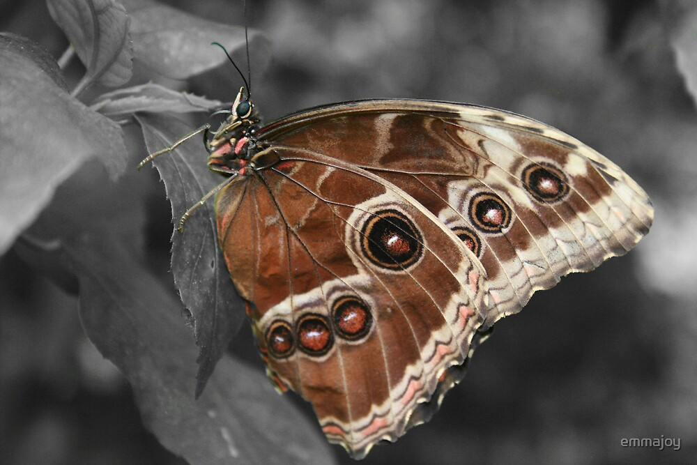 Butterfly by emmajoy