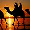 Camels at Sunset by chriso