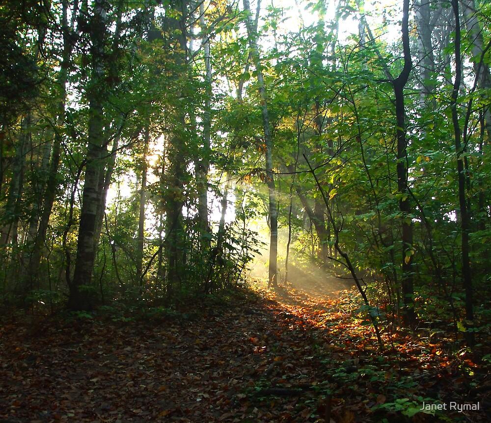 Shine by Janet Rymal