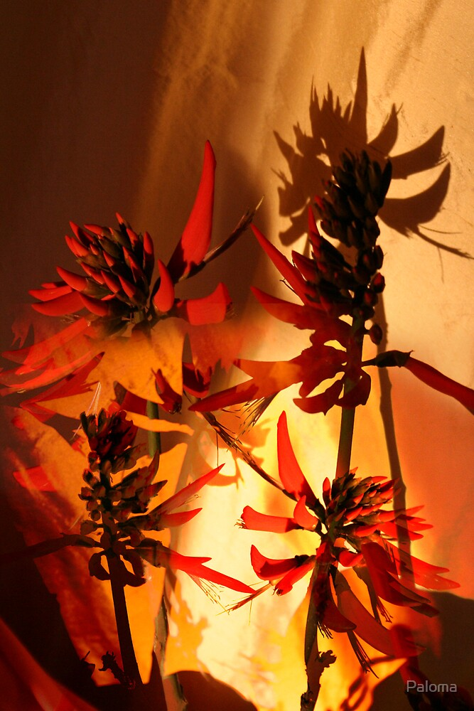CORAL FLOWER WITH FLAME  by Paloma