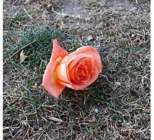 Forgotten Rose Photographic Print